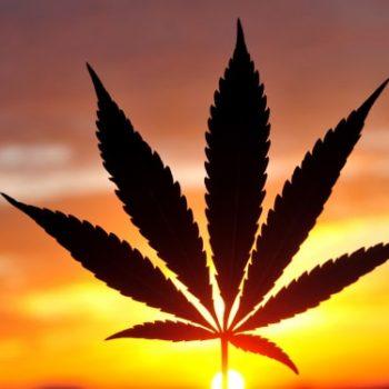 Cannabis Meltdown